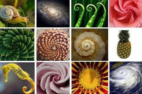Fibonacci Sequence In Nature Genome DNA intuguide